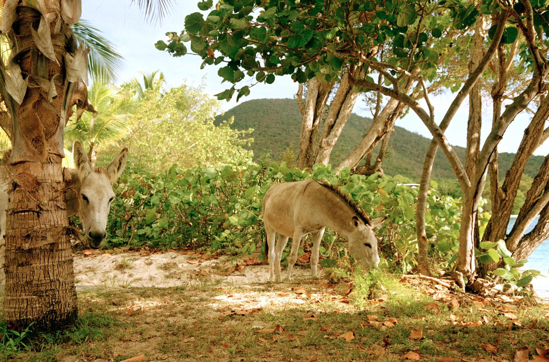donkey_studies_1