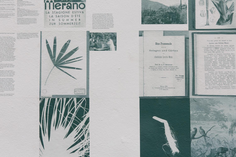 palmtrees_5